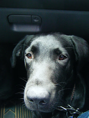 closeup of Celia's face as she rides in the car; her whiskers on eyes and muzzle are highlighted in the sun