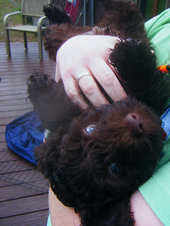 brown puppy on his back in Michelle's arms