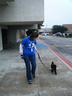 Alfie walking toward the mall, tail wagging