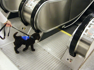 Alfie pulls toward the escalators