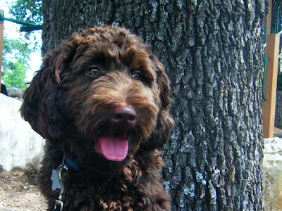 Alfie sits in front of a tree; his mouth's open a little and he's looking off to the side