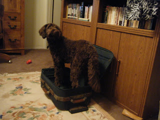 He's in the same suitcase but now he's standing up looking over his shoulder with a questioning look; he's taller than the suitcase & doesn't look like he can fit in it very well