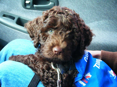 Alfie's being held in the car on someone's lap; he's got his blue jacket on and is looking intently at the camera