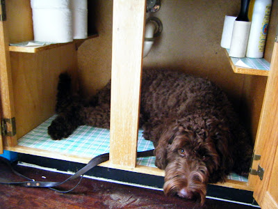 Alfie's curled comfortably inside the cupboard area under the sink