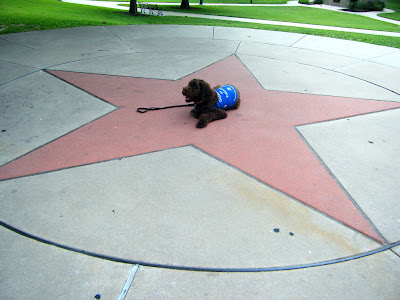 Alfie's by himself in this shot; he's in a down stay with leash on the ground, in the center of a red Texas star inscribed in the pavement, roughly 10-12 feet in diameter.