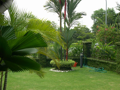 modern gardens with palm trees