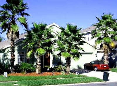 luxury palm trees landscaping around modern house