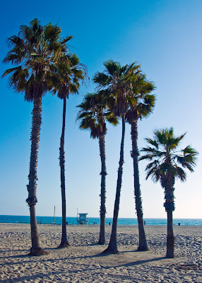 Large Palm trees on the beach