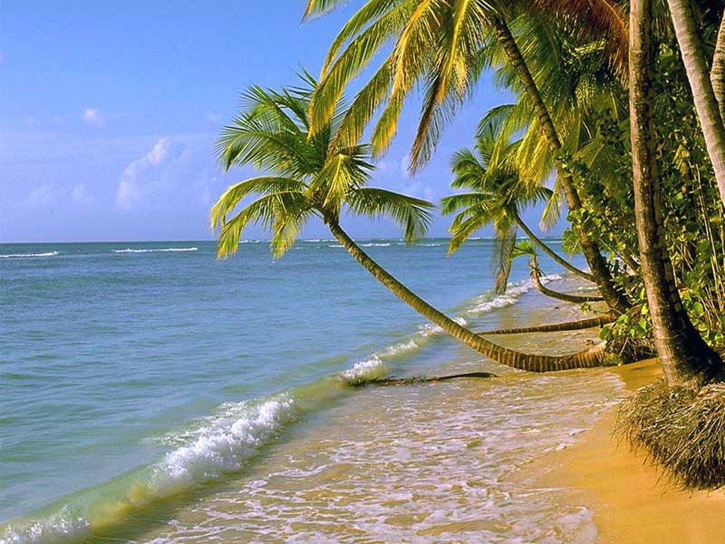 Luxury Home Gardens: BEACH PALM TREES