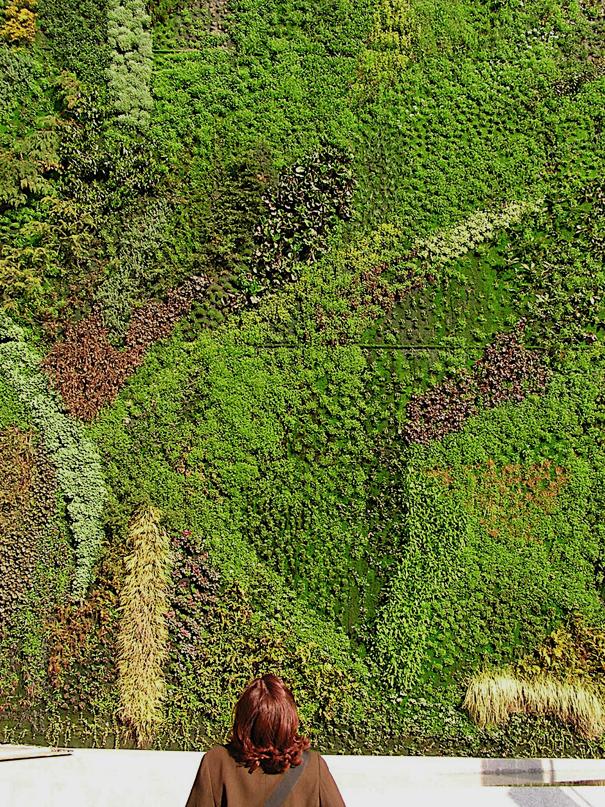 fotos de jardins horizontais : fotos de jardins horizontais:ou isto ou aquilo: Jardins Verticais