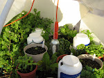 Hoop House Experiment