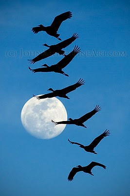 Sandhill Cranes and the full moon (c) John Ashley