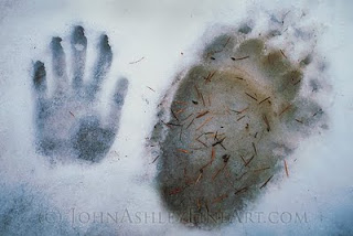 Two paw prints, two very different animals (c) John Ashley