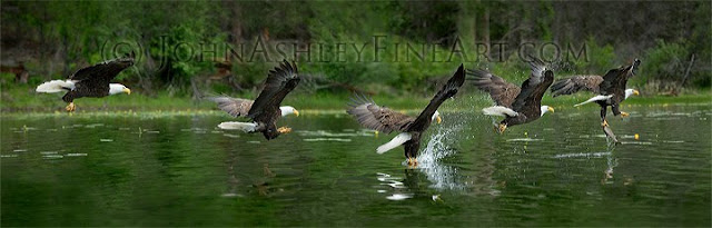 Eagle Talons (c) John Ashley