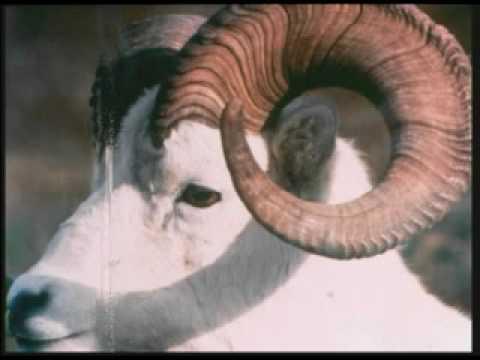 Fibonacci Sequence In Animals Marvelous Manipulative...