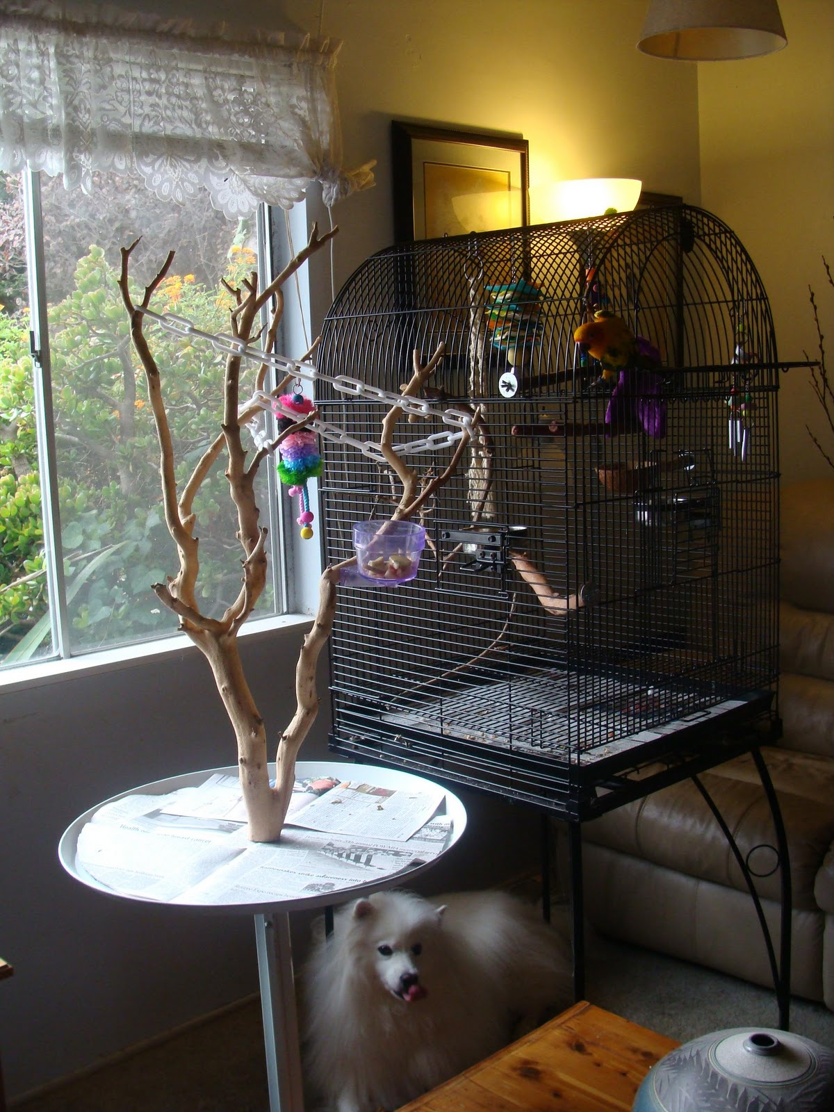 Yasha39s Bonsai Blog Maia Has A New Play Tree
