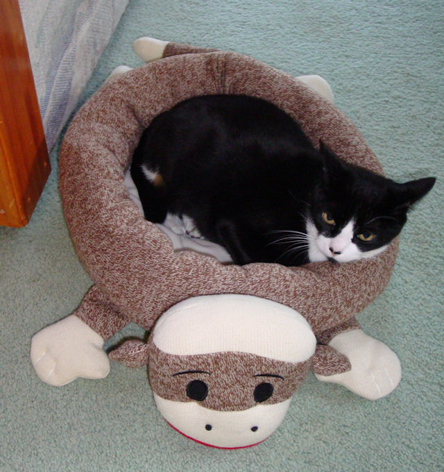 There Ears To Be A Family Resemblance Between Sock Monkey Cat Bed And My Giant Twins Jarvis Simon