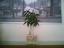 Base para Plantas