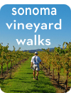 Sonoma Vineyard Walks