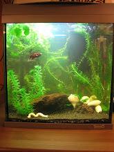 Mitt andra akvarium
