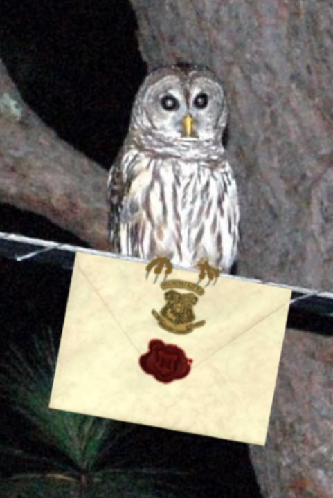 My Log Cabin Life Owl Sighting