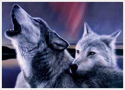 pics of wolves