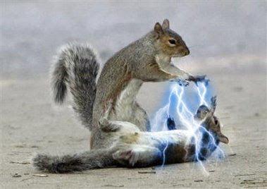 Jedi+Squirrels3.jpg