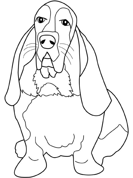 bassett coloring pages - photo#11