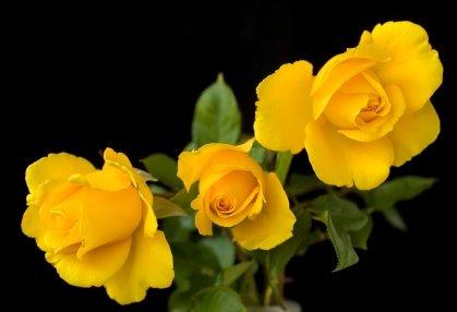 Hope Rose