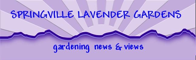 Springville Lavender Gardens