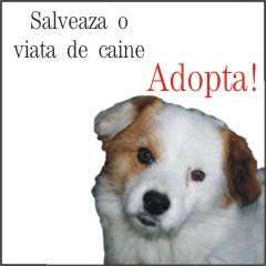 cine doreste sa adopte un catel sau pisica din Braila poate trimite un mail la adinav2005@yahoo.com