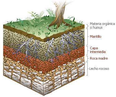 Los fastuosos biologos de 4c mayo 2011 for Como estan formados los suelos