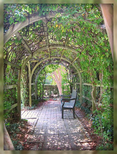 Living In Williamsburg, Virginia: Ivy Covered Patio in Colonial ...