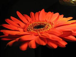 цветы рядом