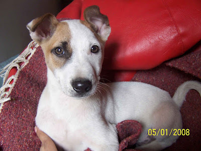 Good Breed Dogs For Adoption In Delhi