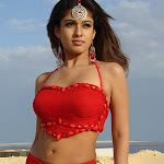 Actress Nayanthara - Celebrity Photos