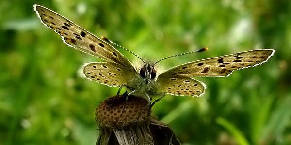 MetamorfosisMariposa