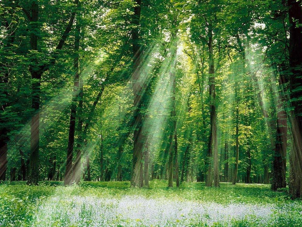 Bosque Iluminado Bosque_Iluminado-1024x768-241098