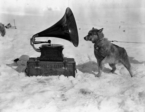 "Dog Chris, listening to the gramophone, during the British Antarctic (""Terra Nova"") Expedition of 1910-1913. Photograph taken by Herbert Ponting, circa January 1911."