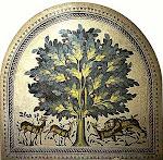 Árbol sípido y desideroso