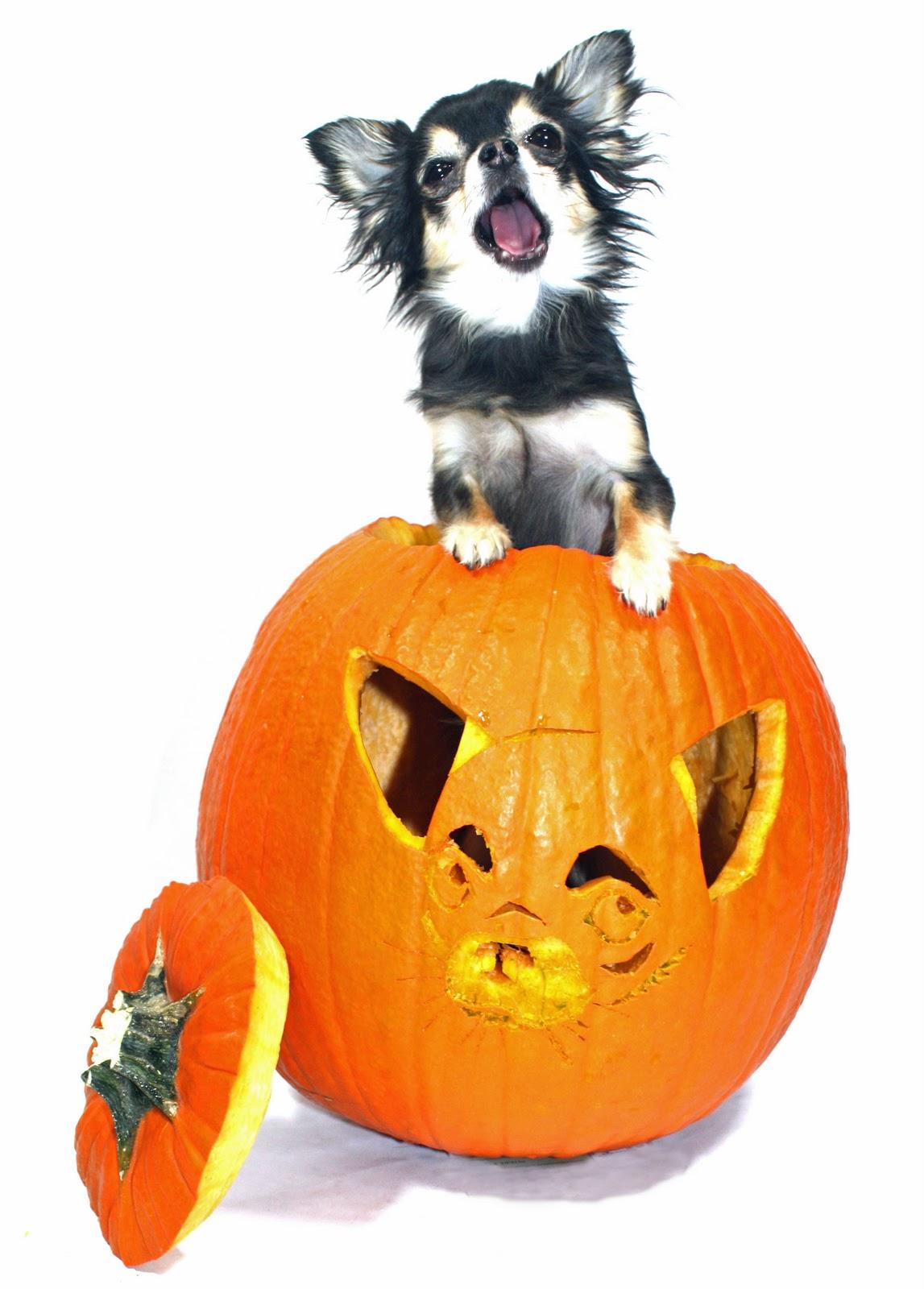 Dog Pumpkin Stencil Im...