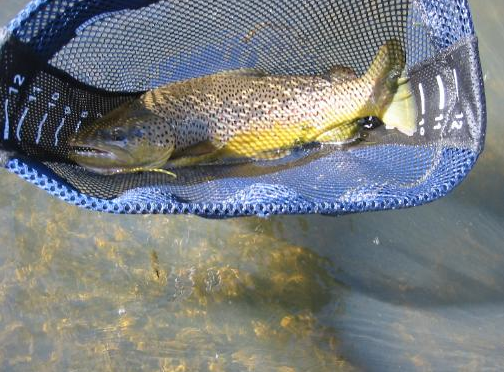 Virtual fly guides east walker river ca fly fishing report for Walker river fishing