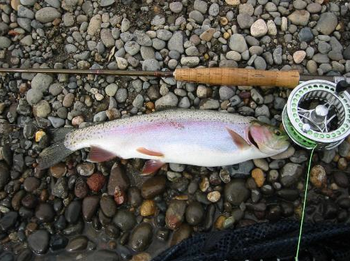 Virtual fly guides truckee river nv fly fishing report for Fly fishing nevada