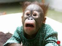 monyet.jpg (800×600)