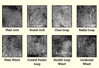 Fingerprint Patterns And Pictures