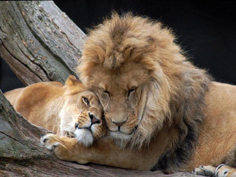 imagenes de animales enamorados - animales enamorados Listas 20 Minutos