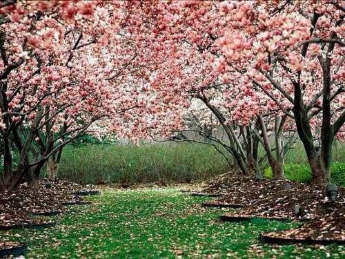 http://4.bp.blogspot.com/_duO1nmSLMR8/TKX9TAZYhLI/AAAAAAAAAXo/5PLKT2wrTHw/s1600/primavera.jpg