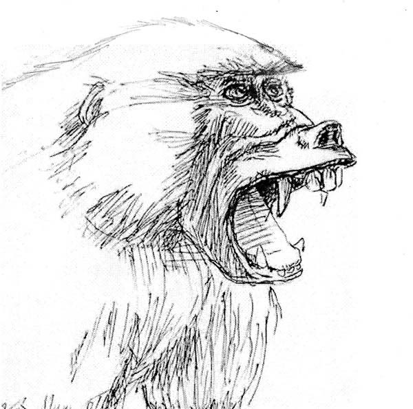 Bastien laurent dessin croquis d 39 animaux - Dessin d animeaux ...