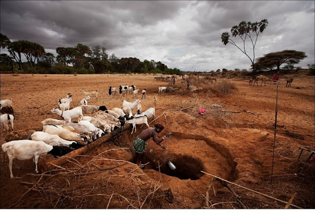 الحياة في إفريقيا - عالية الدقة - 9