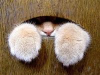 Resultado de imagen para gato encerrado